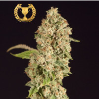 OG REEK'N DEVILS HARVEST SEEDS REGULARES 10UN