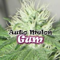 AUTO MELON GUM DR UNDERGROUND 2UN