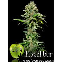 EXCALIBUR EVA SEEDS 3UN