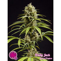 FRUITY JACK PHILOSOPHER 1UN