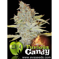 FURIOUS CANDY EVA SEEDS 9UN