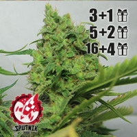 HAS PLANT G-13 SPUTNIK SEEDS