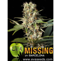 MISSING IN BARCELONA EVA SEEDS 6UN