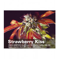 STRAWBERRY KISS BCN SEEDS 3UN