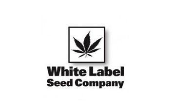sensi white label seeds
